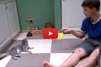 """This Cat Says, """"This Is How I Entertain My Human."""""""