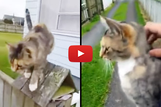 This Cat Tracks Down The Mailman Every Day... Wait Until You See Why!