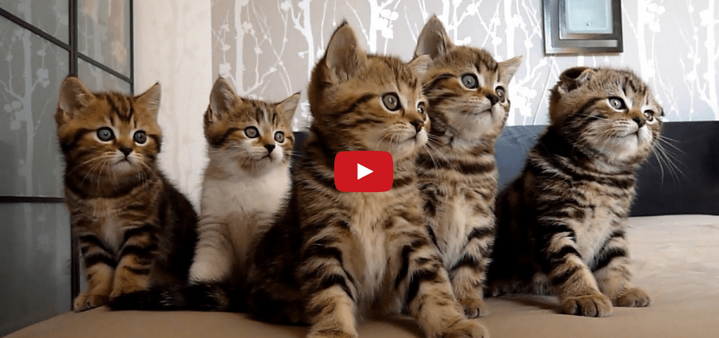 """This Chorus of Cavorting Cats Will Cure Your Case of """"Hump Day"""" Blues!!"""