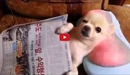This Clip of a Dog Enjoying Lavish Comforts is Oddly Mesmerizing!