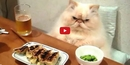 This Compilation of Cute Cats Acting Like Humans is Hilarious! I Can't Stop Laughing!!