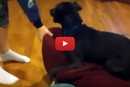 This Dog's Reaction Will Have You Laughing Out Loud! We're Serious!