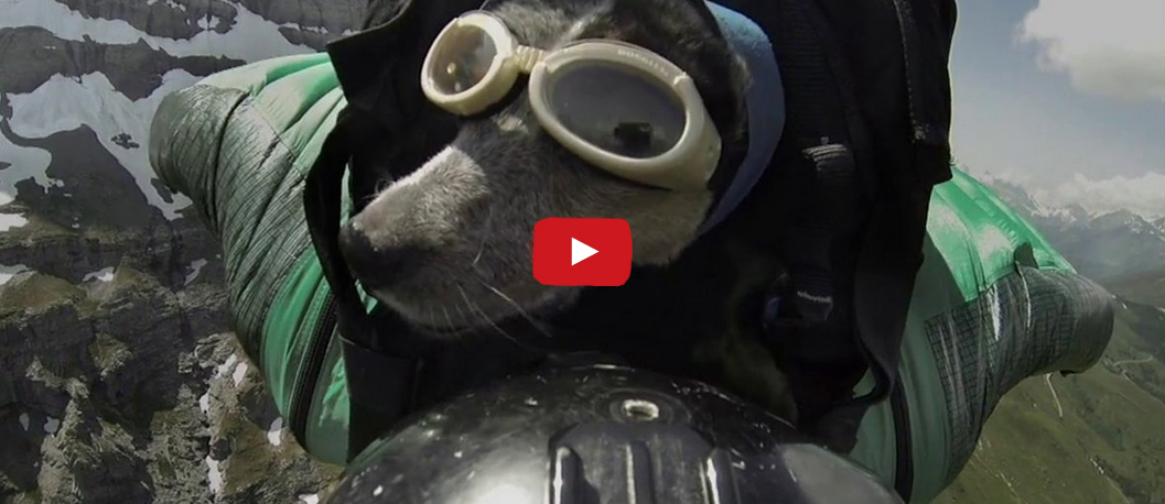 This Dog and His Human Are Going on an Adventure- and it's Absolutely Incredible!!