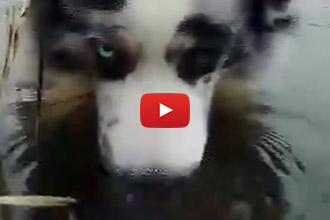 This Dog Blows Bubbles... With His Nose!