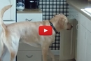 This Dog Can Make His Own Treats!