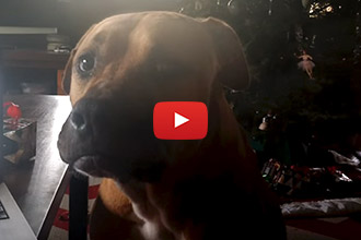 This Dog Cant Howl, And It's Adorable!