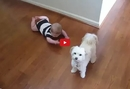 This Dog Dances to Keep His Baby Human Happy- And It Is Literally </b>Too Cute</b>!