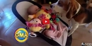 This Dog Delivers Toys to a Crying Baby in an Incredible Display of Parental Instinct! Wow!!