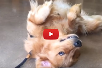 This Dog Does Everything He Can To Avoid Leaving The Pet Store!
