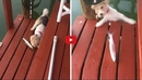 This Dog Examining a Fish Did Not Expect What Happened Next!! I Can't Stop Laughing!