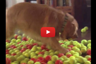 This Dog Gets 800 Balls for His Birthday and His Reaction is PRICELESS!!