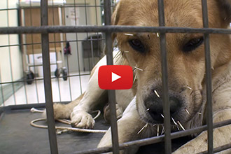 This Dog Goes From Scared And Injured, To Happy And Healthy