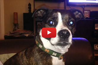 This Dog Has A Lot To Say To His Owner!