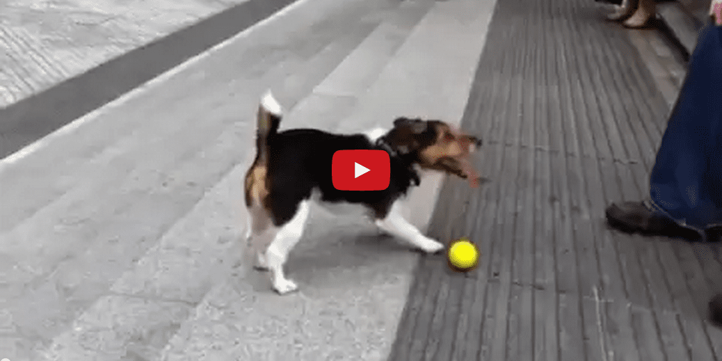 This Dog is Playing Fetch By Himself- and It's Pretty Impressive! Poor pooch- I Would Play Fetch with You!!