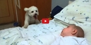 This Dog Loves Babies But is Too Small to Say Hello! The Result is Hilarious!!