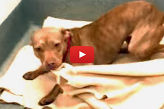 This Dog Makes His Bed Every Day At The Shelter While Waiting For His Forever Home