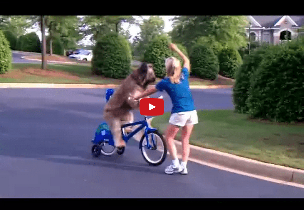 This Dog Riding a Bike Will Help You Forget Your Problems for 30 Ethereal Seconds of Unbridled Bliss! Watch it Now!!
