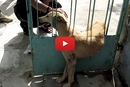 This Dog Was Losing Hope, But Animal Aid Saved The Day!