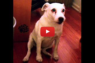 This Guilty Dog Has the Cutest Reaction When Mom Asks Who Ate the Trash!