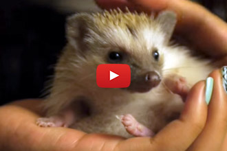This Hedgehog Is A Dog's Best Friend!