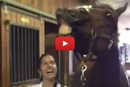 This Horse Blows out His Birthday Candles and Has the Most Amazing Reaction!