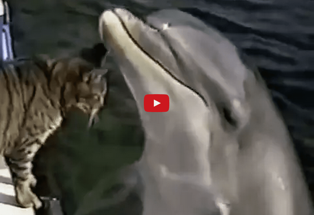 This Interaction Between a Cat and Wild Dolphins is Enthralling! I Can't Look Away!!