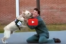 This Is How One Dog Changed The Lives Of His Humans