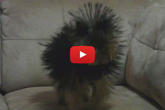 This is What Happens When a Static Charged Blanked Meets a Long-Haired Dog!