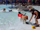This is What Happens When Dozens of Dogs Have a Pool Party Together!