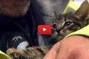 This Kitten Was Trapped In A Storm Drain For 33 Hours... His Rescue Is Incredible!