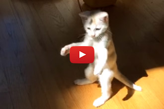 This Kitten Will Make You Laugh!