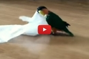 This Little Bird Loves Her Unusual Toy