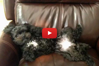 This Little Dog Has Mastered the Art of Relaxation!