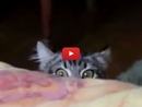 This May be the Cutest Compilation of Cats Trying to Hide Ever!!