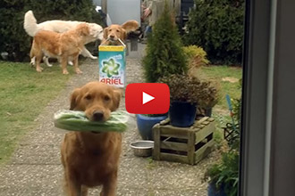This Might Be The Handiest Trick To Teach Your Dog!