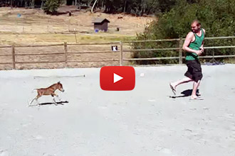 This Miniature Horse Can't Stop Chasing His Human!