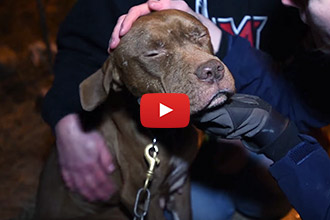 This Momma Dog Never Gave Up On Reuniting With Her Family, Despite All Odds