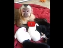 This Monkey Meeting a Litter of Puppies is The Most Adorable Thing You'll Watch All Day!