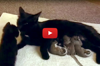 This Mother Cat Adopts Some Unlikely Babies... The Result? Overwhelming Cuteness!