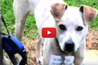 This One Rescue Story You Have To Watch!