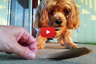 This Pooch Has an Adorably Irrational Fear of a Bird Feather- Too Cute!