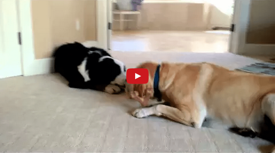 This Poor Pooch Gets Her Bone Stolen By a Bully- And He Doesn't Even Want It!!