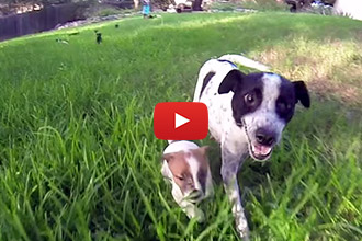 This Pregnant Pup Was Going to Be Euthanized Until This Vet Stepped In!