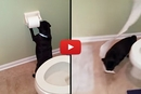 This Pug Unrolls the Toilet Paper and You Won't Believe Where He Takes It!