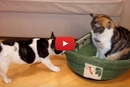 This Puppy's Bed Was Stolen, And He Wants It Back!