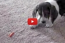 This Puppy Does NOT Trust This Carrot!