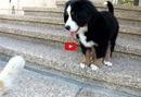 This Puppy Just Met a Cat for the First Time- And His Reaction is ADORABLE!!