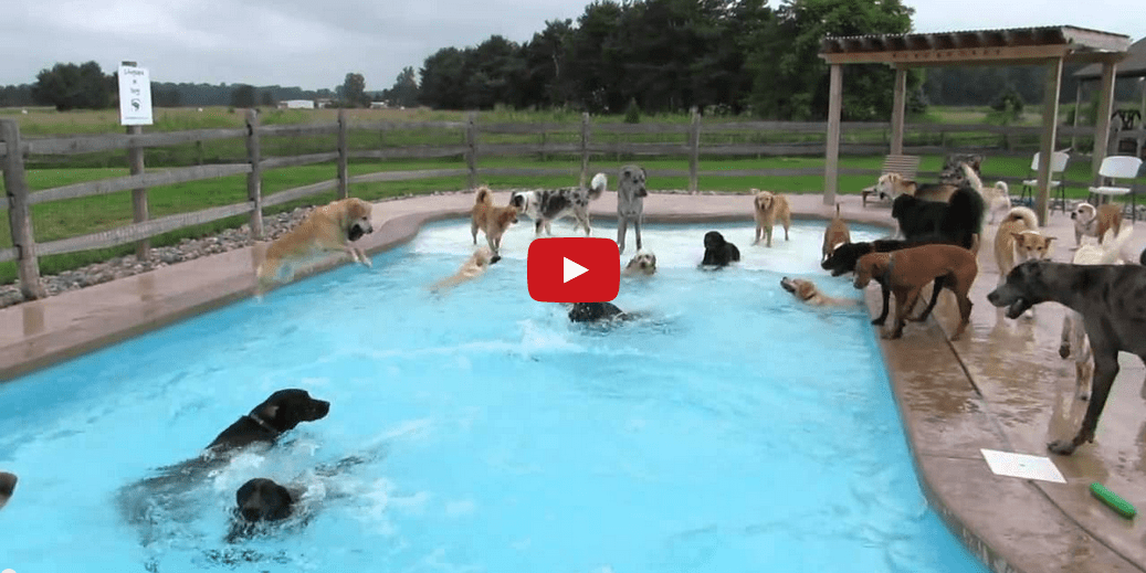 This Puppy Pool Party is Poppin'! Watching These Pups Beat the Heat Will Make Your Week Complete!!