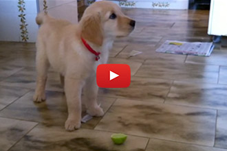 This Puppy Tries A Lime For the First Time and Has the CUTEST Reaction Ever!