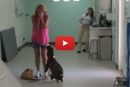 This Quadriplegic Dog Walks for the First Time and His Owner Totally Freaks Out!